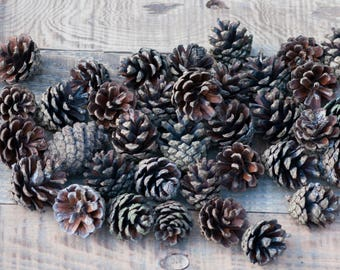 10 Pcs Pieces Pine Cone Wedding Decoration Rustic Home Decor Natural Pine Cone Craft Supplies