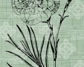 Digital Download Carnation image Antique Illustration  c. 1900, digi stamp, digis, digital stamp, Elegant, and beautiful