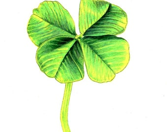 """Four Leaf Clover Print: Digital print of an original drawing available 5x7"""" or 8x10"""""""