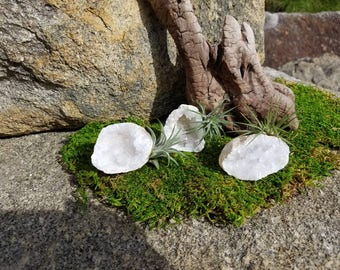 Air Plant Crystal Geode - Small | Tillandsia | Crystal Garden | Quartz | Air Plant Gift | Airplant Gift | Quartz Crystal | Desk Accessory