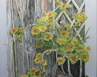 Pastel Drawing - Geraniums and old wood