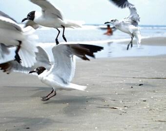 Sea Birds - beach photograph - ocean gulls sea flight art photography seagull coastal