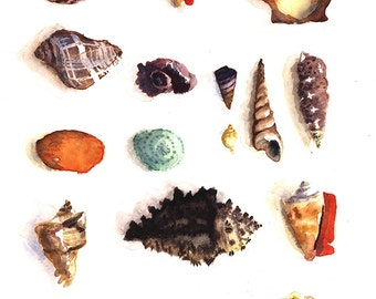 Sea Shells Watercolor Print 11 x 14, Nautical Painting, Nature Art, Home Decor Wall Art seashell Aquarelle, Watercolor Print, Ocean