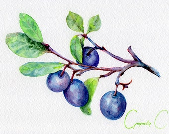 Blueberry, berries, Watercolor Original Painting from the Artist, Svetlana Smirnova