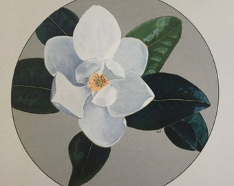note cards:  southern magnolia