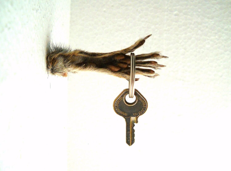 Eichhörnchen Fuß Schlüssel Haken Wand Halterung Fantasy Horror