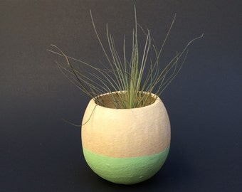Air Plant Pod - mint bottom