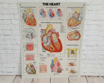 Vintage Illustrated Heart Anatomical Chart