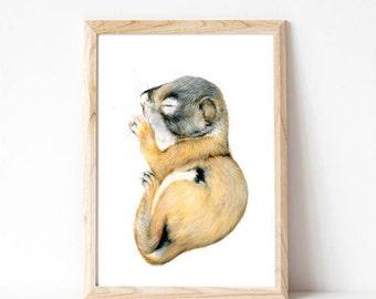 baby animal artwork, woodland nursery, baby animal prints, squirrel, prints baby animal, woodland creatures, forest animals, woodland prints