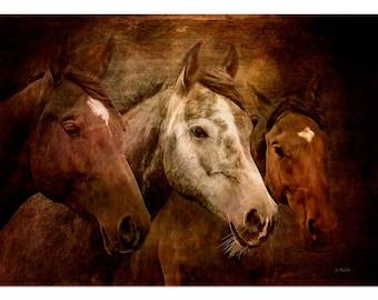 "Photographic print of three horses, wild animals, horses. Mounted art 8"" x 10"" , wall art, gift, presented in film sleeve. Digital art"