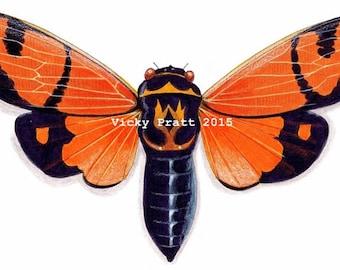 Orange cicada. CARD Blank.