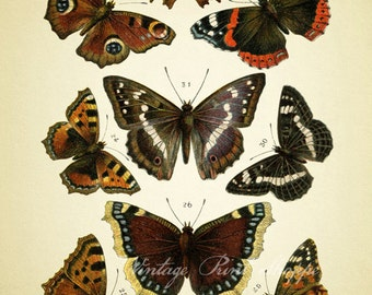 Orange Moth print Botanical print Vintage Educational plate reproduction 5x7 art Naturalist decor Home Decor cottage decor Moth Butterfly