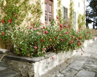 La Pietra Roses - 5x7 photo - Metallic finish