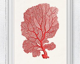 Sea fan coral no.03 - sea life print-Marine  sea life illustration A4 print SWC036