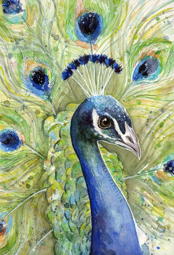 Peacock Watercolor Painting Giclee Art Print Peacock Art