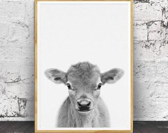 Calf Print, Baby Cow Print, Nursery Animals, Nursery Animal Print, Nursery Print, Cow Wall Art, Nursery Wall Art, Nursery Printable, Calf
