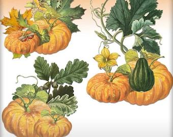 Fall Themed Element Clusters - Pumpkins - Set of 3 PNGS  - Seasonal Clipart - Digital Art Scrapbooking - Journal Clipart - Cardmaking Images