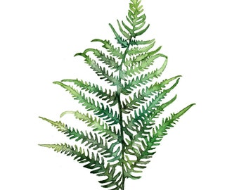 "Fern Print - Made from my Original Fern Painting ""Fern Study 2"", Fern, Botanical Print, Watercolor Fern, Fern Painting, Green, Woodlands"