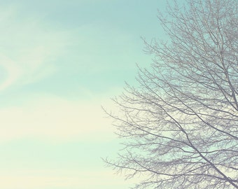 Bare Tree Color Photo Print { blue, brown, branches, winter, tree, clouds, sky, sunshine, wall art, macro, nature & fine art photography }