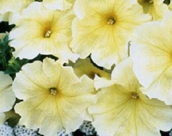 50 Pelleted Prism Sunshine Petunia Seeds