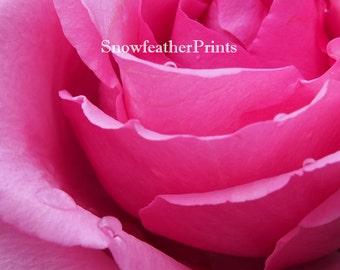 Pink Rose - Ships Free
