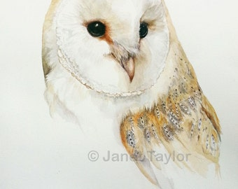 BARN OWL print of a watercolour painting of a Barn Owl by Jan Taylor.