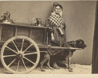 Serious woman milk maid with dog cart antique photo Holland