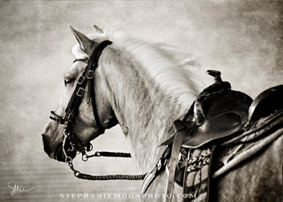 Horse photography black and white horse photography fine art