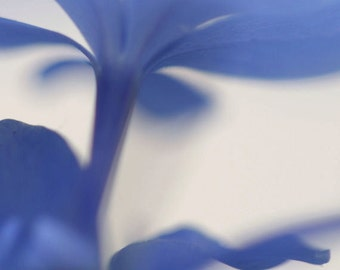 "Abstract wall art, blue flower photograph, home decor -- ""Dreaming in Blue 2"", a 5x5-inch fine art photograph"