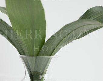 Fresh greenery stock photo | Green and white instagram image - Foliage stock photo - Nature stock photo - Minimalist stock photo