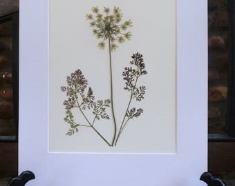 Real Pressed Flower Art Botanical Herbarium of Queen Anne's Lace 8x10 OR 11x14