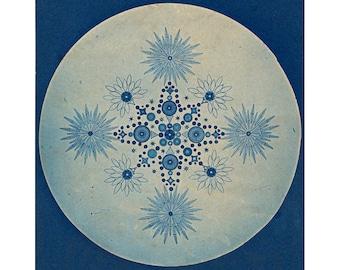 Antique diatoms art print, Diatom art, Diatom photograph, Microbiology, Sea life art, Antique photography, Cyanotype, Natural science art