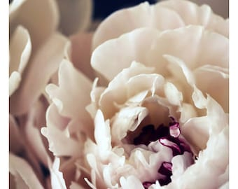 Nature Photograph - Peony Photograph - Flower Photograph - Spring - Amour - Fine Art Photograph - Alicia Bock - Floral Art - Custom Print