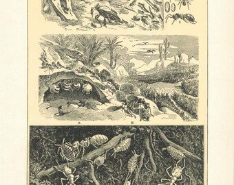 """Digital Download """"Ants"""" Illustration (c.1900s) - Instant Download of Ants and Ant Hills, Illustrated Insects"""