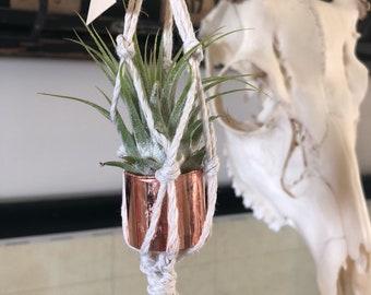 Tiny macreme air plant