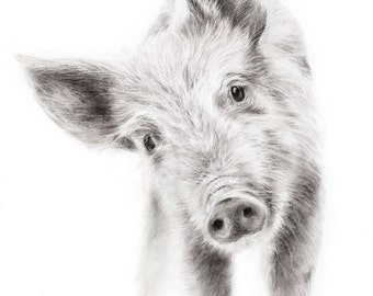 Piglet Pig Drawing Charcoal Farm Art Print
