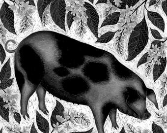 Original Scaperboard Artwork - Old Spots Pig and Bird Cherry
