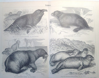 """Lithography, """"Seals""""."""