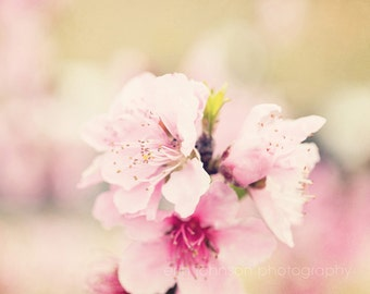 nature photography, flower photography, pink home decor, pink wall art, nursery art, large wall art, living room, bedroom art, pear blossoms