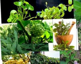 AYURVEDA - the powders of plants Ayurvedic