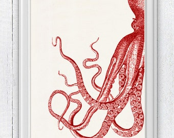 Vintage red octopus n 22 - sea life print- Marine  sea life illustration A4 print- vintage natural history SAS148