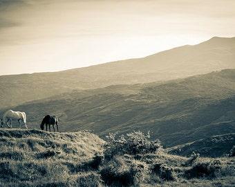 Horses photography, wild horses, Nature photography, animal photography, vintage, old style tones, Tuscany landscape