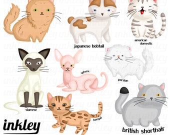 Cute Cats Clipart, Cute Cats Clip Art, Cute Cats Png, Cat Clipart, Kitten Clipart, Home Pet Clipart, Pets Clipart, Cute Animal Clipart, Toys