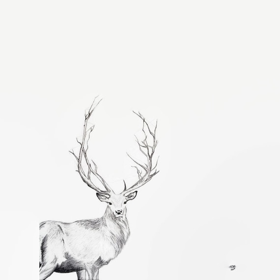 Deer Print Ink Drawing Deer Art Buck Print Buck Art Deer