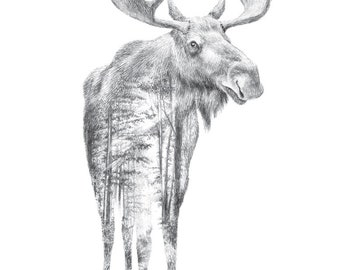 Moose Pencil Drawing - Faunascapes by WhatWeDo