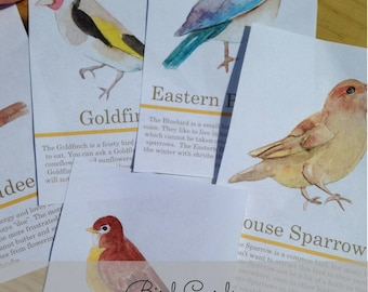 Backyard Birds, Bird Cards, Nature Study, Homeschool, Printables, Instant Download, Charlotte Mason