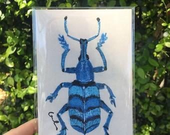 Blue Weevil Beetle Print