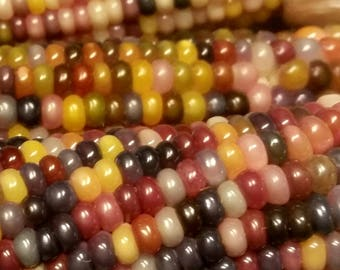 Glass Gem Corn 100+ seeds! Gardening, rainbow colors, fun, kids, Native American,  fall, harvest, planting, decoration,  Free shipping US!