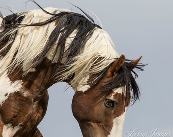 I Heart Picasso - Fine Art Wild Horse Photograph - Wild Horse - Picasso - Sand Wash Basin - Fine Art Print