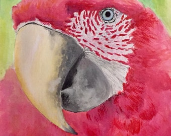 Original Red Parrot - watercolor painting
